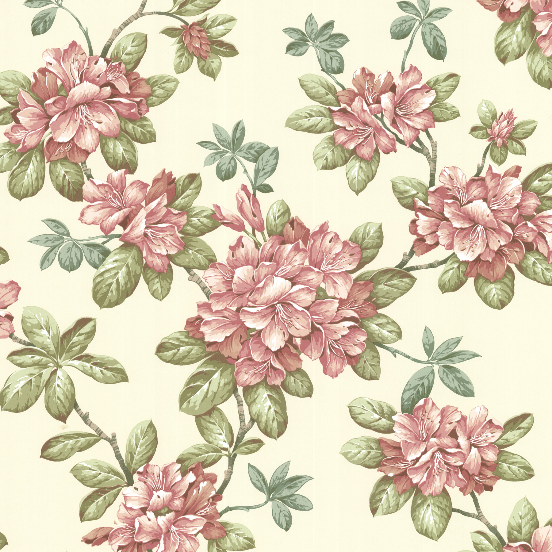 Picture of Bree Rose Lily Trail Wallpaper