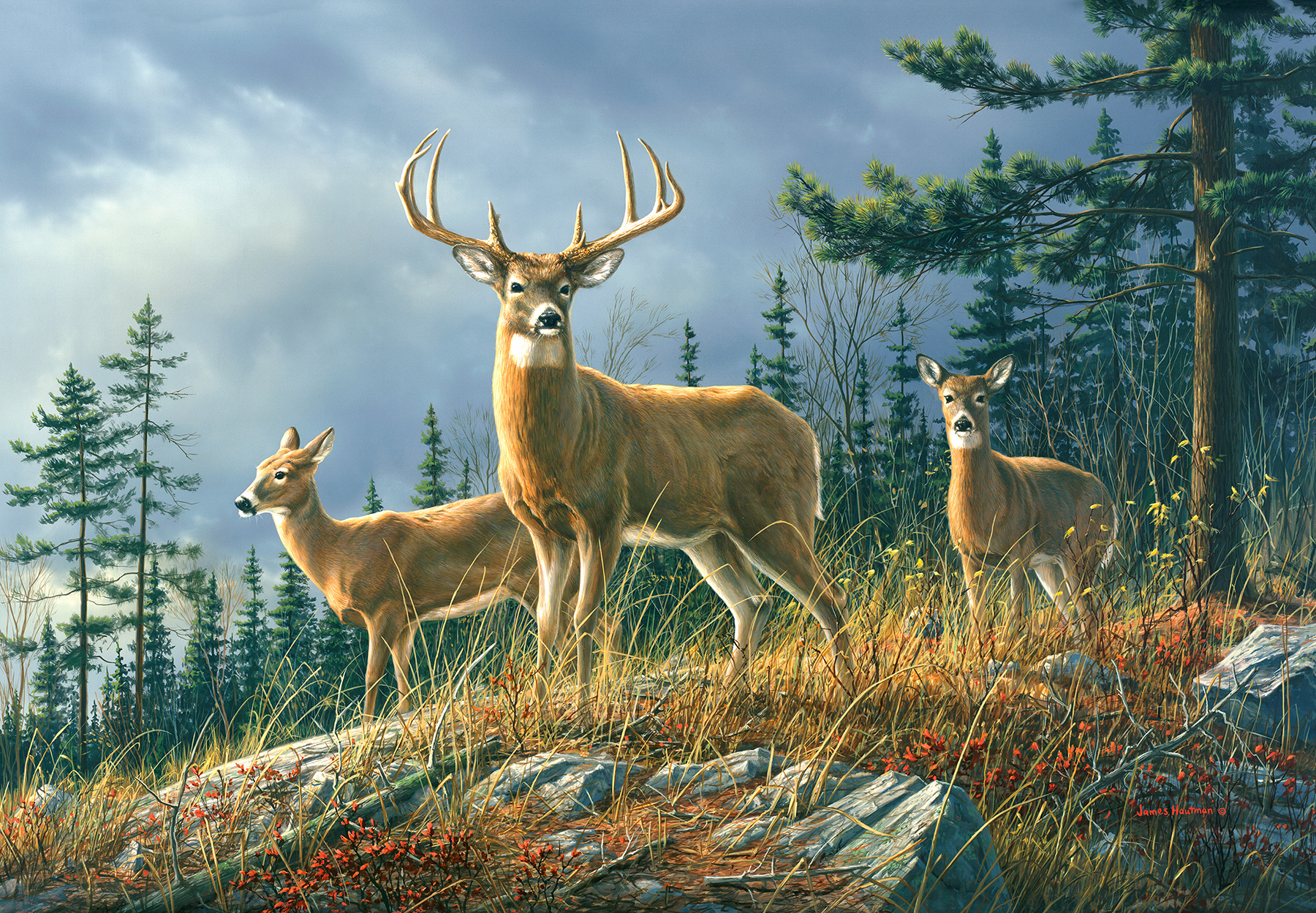 Picture of Autumn Whitetail Mural